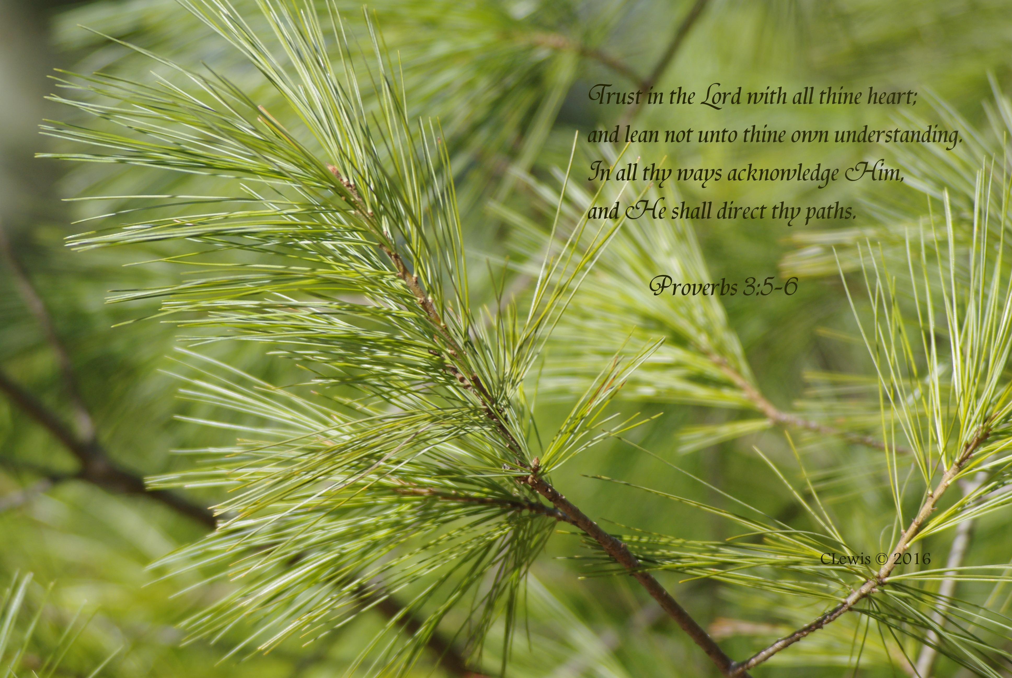 proverbs-3-5-6
