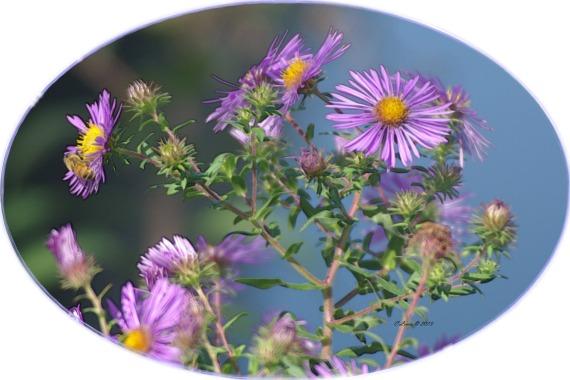purplefloweroval