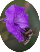 purplepurplebeeoval
