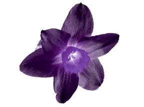 purplepurpledaffodileErased