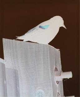 "Stuck this ""negative"" bird"