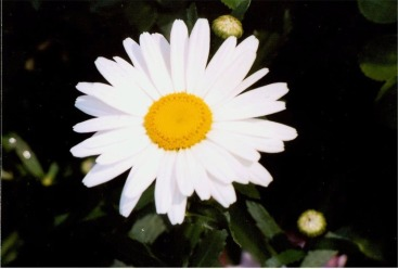 daisyj