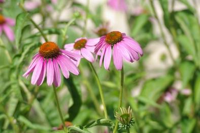 Misc flowers 010