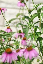 Misc flowers 013