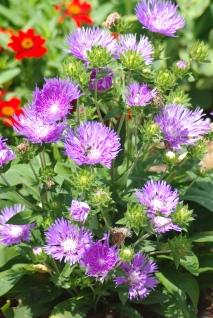Misc flowers 049