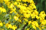 Misc flowers 059
