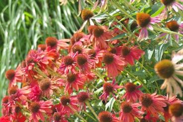 Misc flowers 060