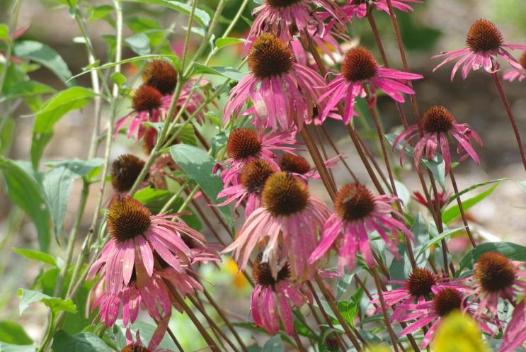 Misc flowers 061