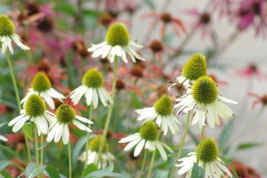 Misc flowers 062