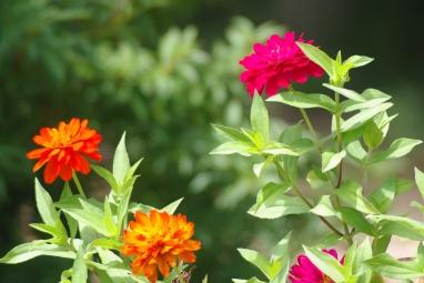 Misc flowers 069