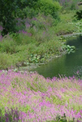 Misc flowers 075