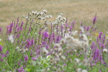 Misc flowers 089