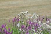 Misc flowers 093