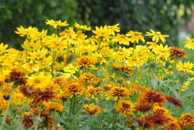 Misc flowers 110
