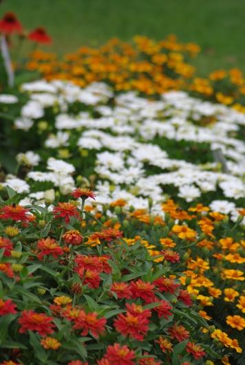 Misc flowers 111