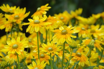 Misc flowers 112