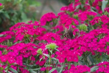 Misc flowers 117