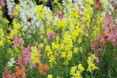 Misc flowers 122
