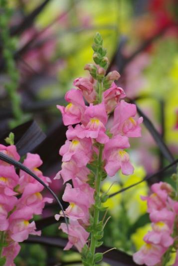Misc flowers 129