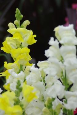Misc flowers 130