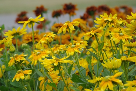 Misc flowers 134
