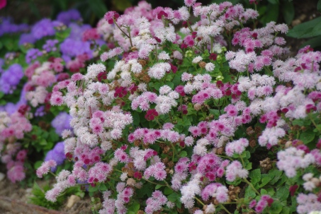 Misc flowers 135