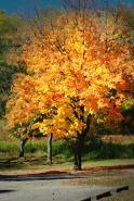 TreeFallOrngHLGLgtPnt