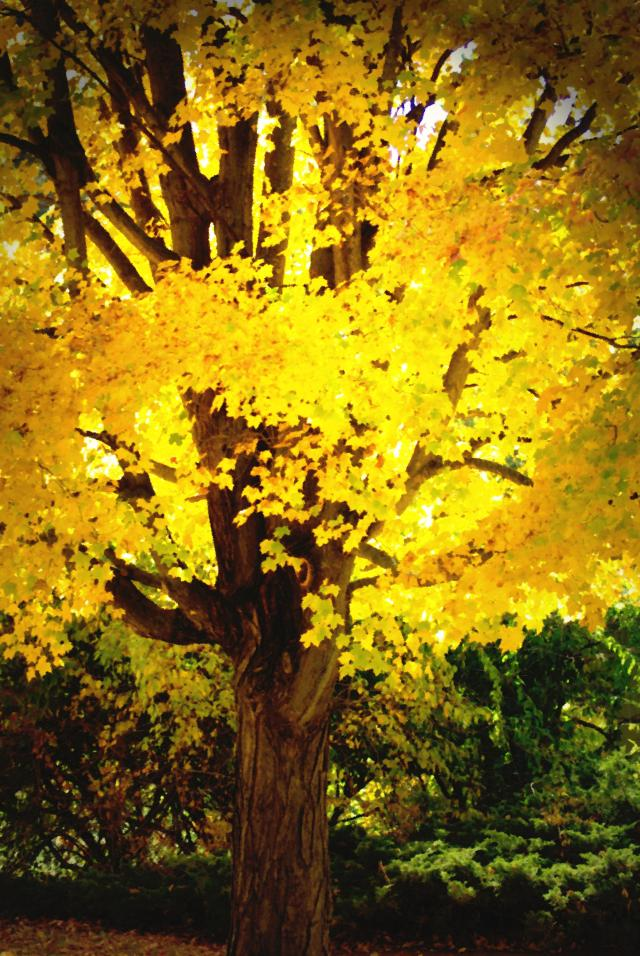 yellowtreeLghtPnt
