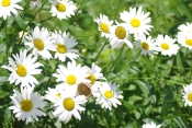 Misc flowers 041