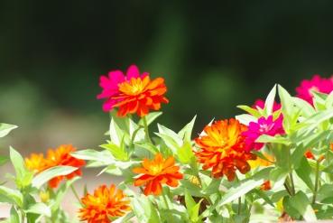 Misc flowers 068