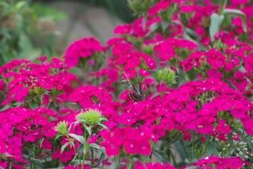 Misc flowers 115