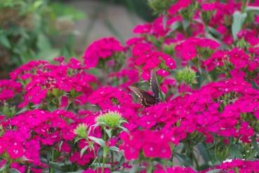 Misc flowers 116