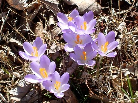 2013April spring misc 005