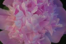 2010springflowersspring2010flowers 272