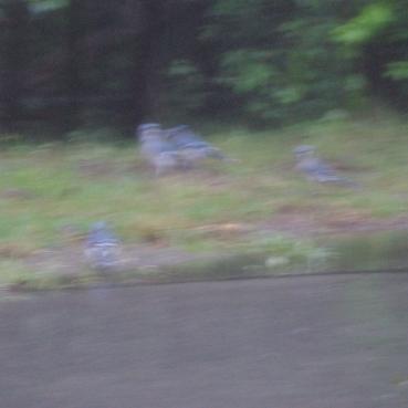 cheesecake deer birds 078