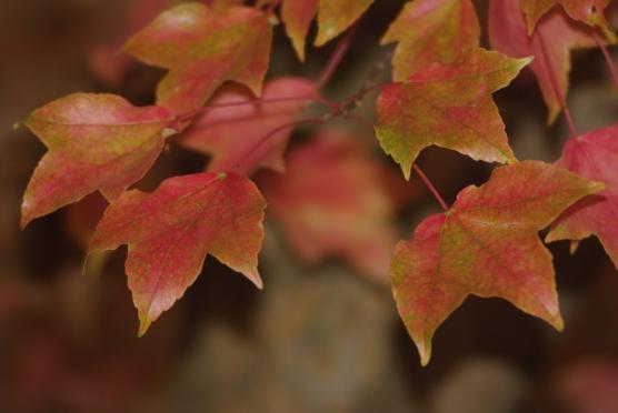 fall2008 085