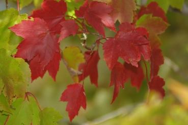 fall2008 117