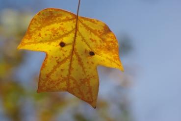 fall2008 134