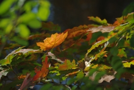 fall2008 171