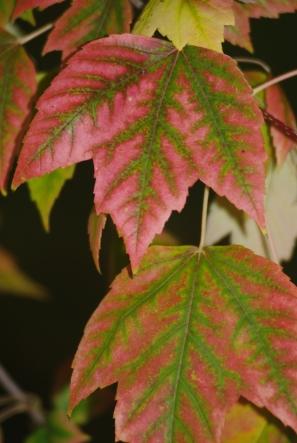 fall2008 192