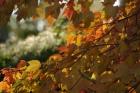 fall2008 198