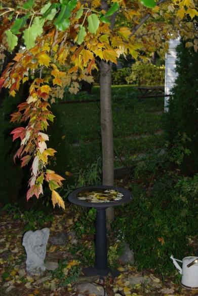 fall2008 220