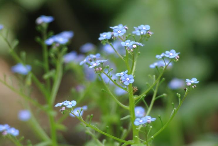 flowers misc 048