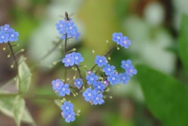 flowers misc 054
