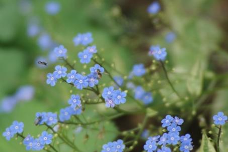 flowers misc 056