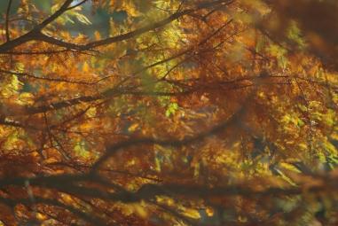 fall2008 125