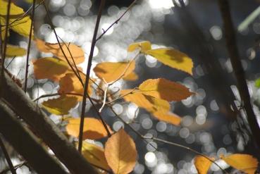fall2008 143