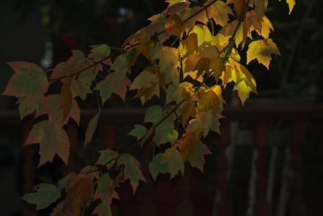 fall2008 197