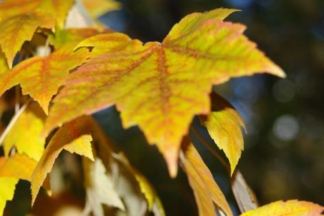 fall2008 212
