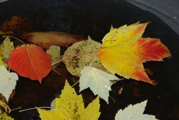 fall2008 225